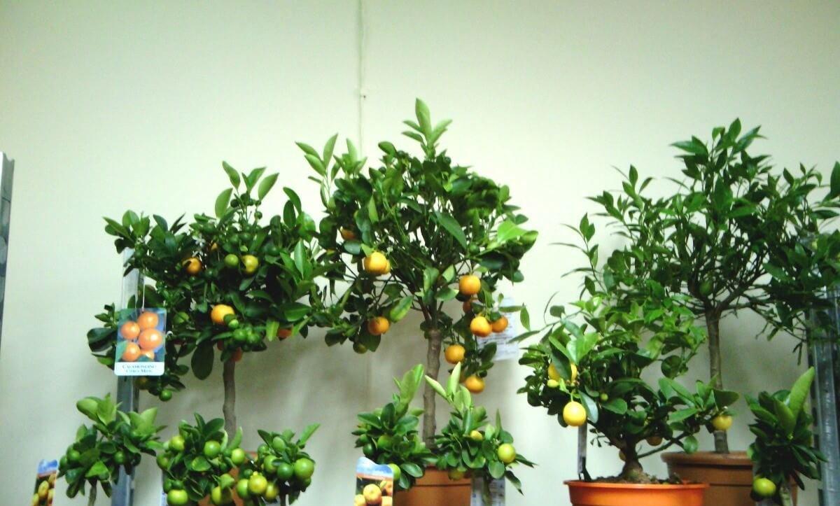 Плодово-ягодная группа