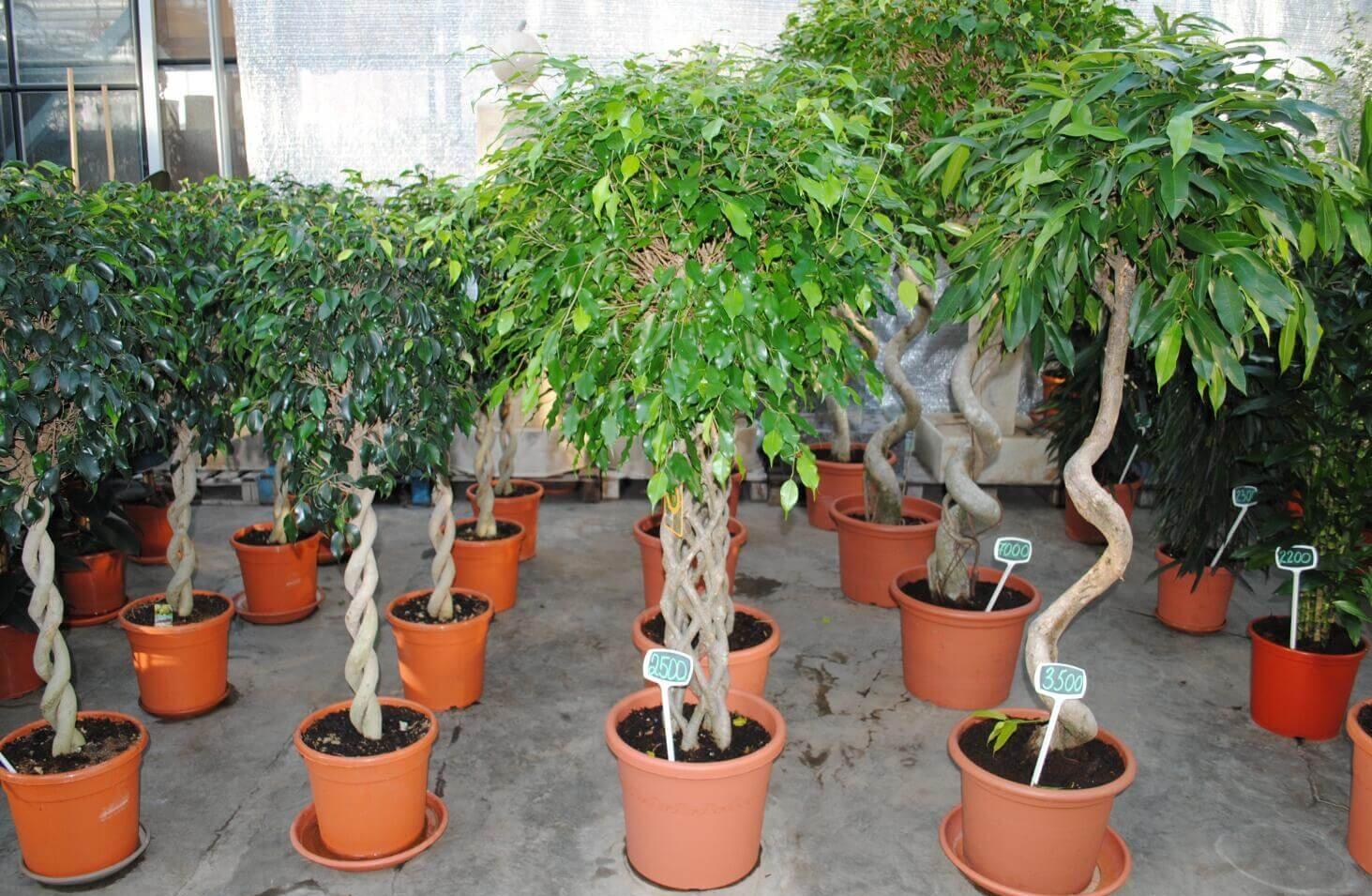 Лиственные декоративные растения