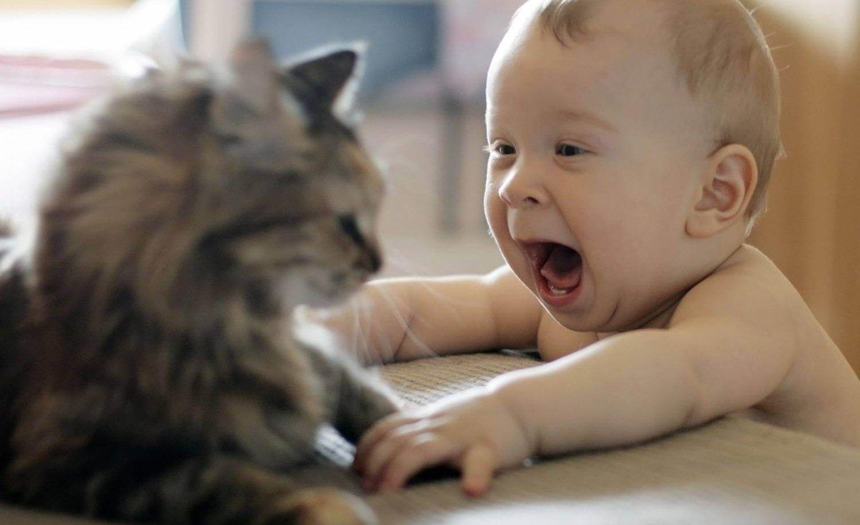 грудной ребенок и кошка