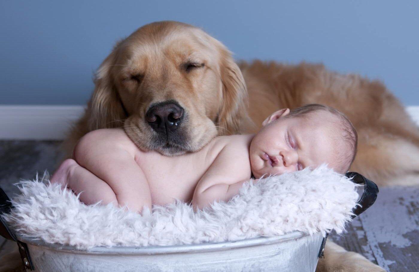 собака член семьи