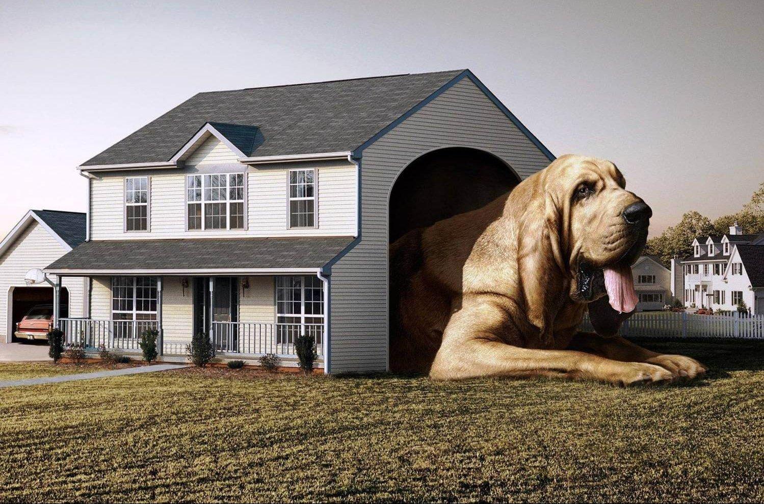 собака в частном доме